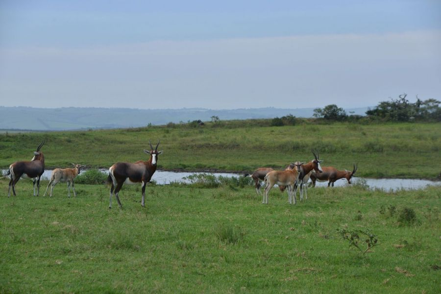 Tala Private Game Reserve in Pietemaritzburg KwaZulu-Natal