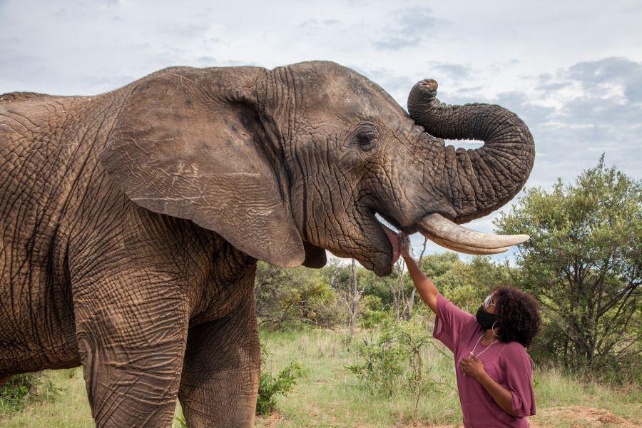 Adventures With Elephants Activities in Bela Bela Limpopo