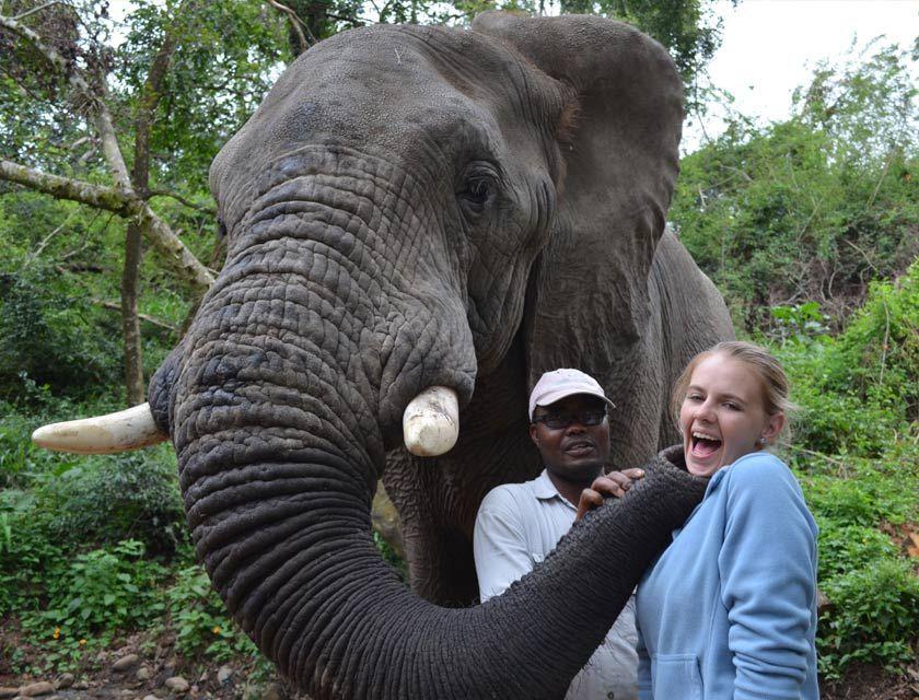 Elephant Sanctuary Hazyview Activities in Hazyview Mpumalanga