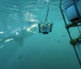 White Shark Projects (Gansbaai - Western Cape)