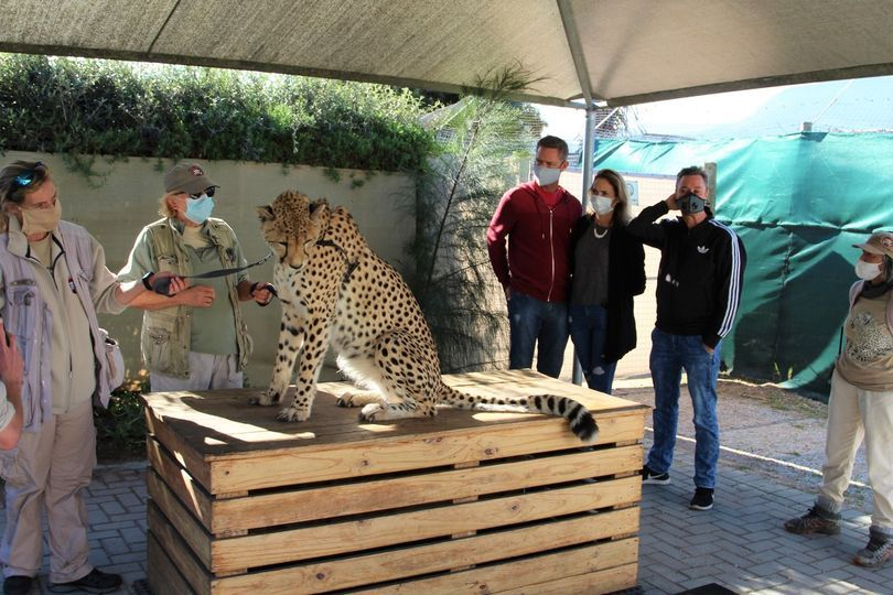 Cheetah Outreach Activities in Firgrove Cape Town Western Cape
