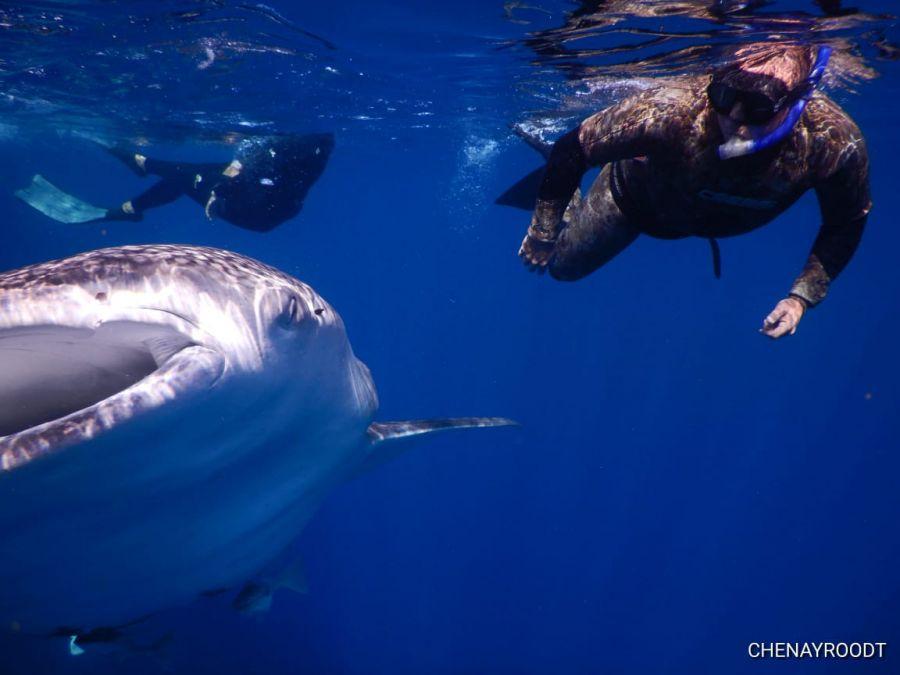 Aqua Wild Africa Scuba Diving in Gillitts Durban Kwazulu-Natal
