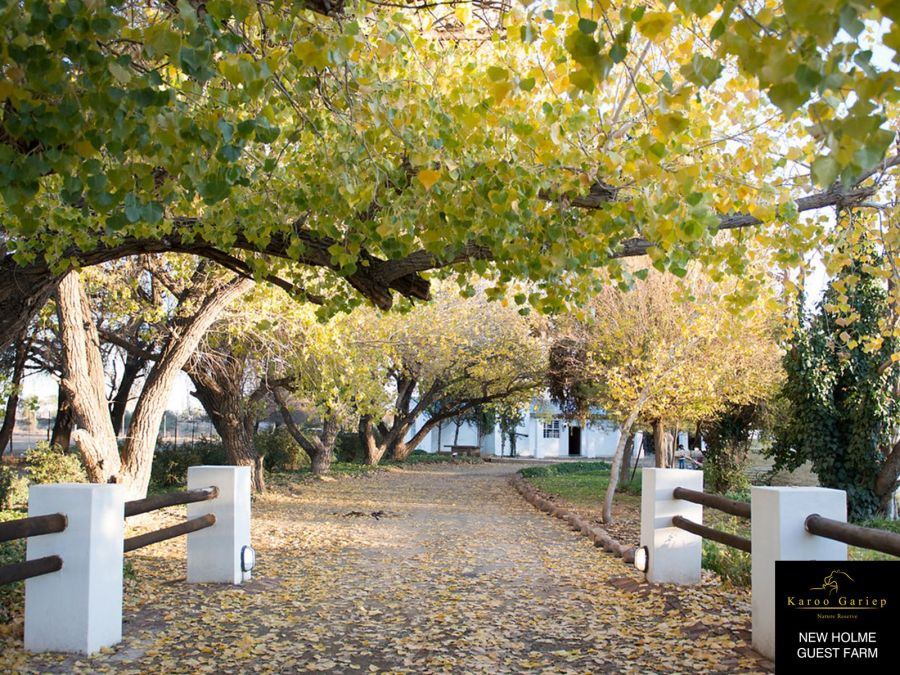 New Holme Country House Accommodation near Colesburg Northern Cape
