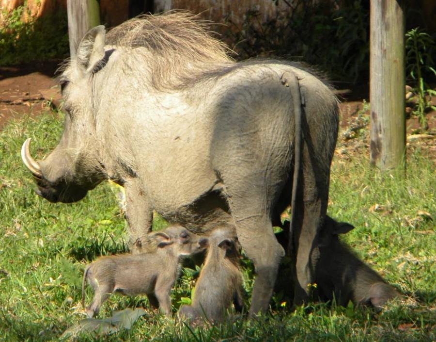 Inkwenkwezi Private Game Reserve (East London - Eastern Cape)