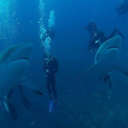 Blue Ocean Dive Resort Accommodation and Diving Activities in Umkomaas KwaZulu Natal South Coast