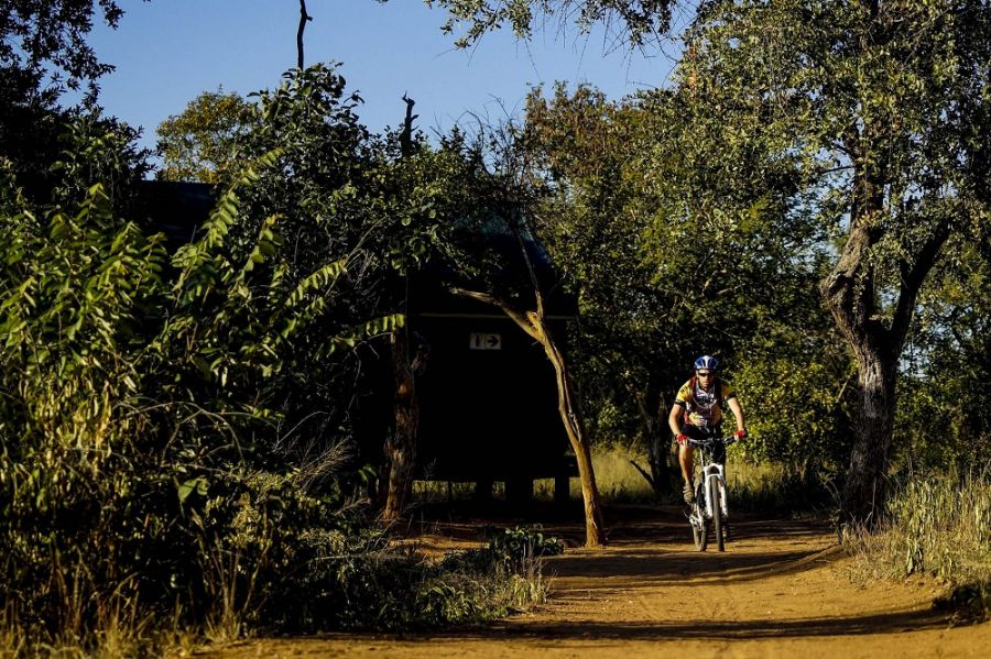 Nthubu Safari Camp in the Masebe Nature Reserve African Ivory Route Limpopo